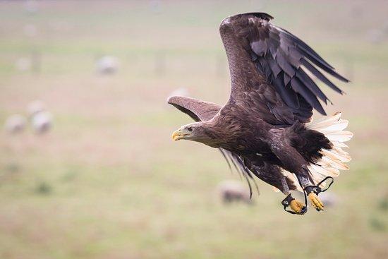 Helmsley, UK: Flying Display