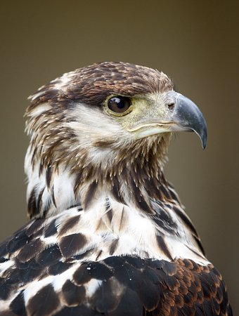 Helmsley, UK: Hawk Walk