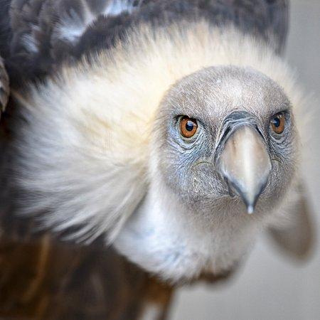 Helmsley, UK: Aviary (through mesh)