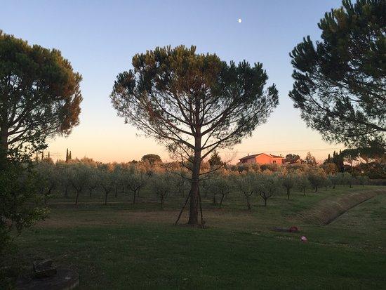 Monsummano Terme, Italia: agriturismo i macchiaioli