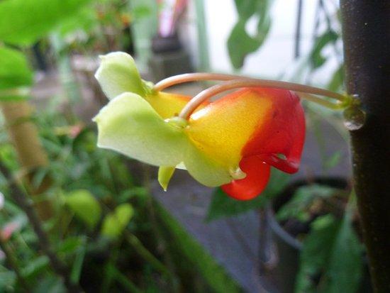 Saint-Gilles-Les-Bains, Ilhas Reunião: Flower II