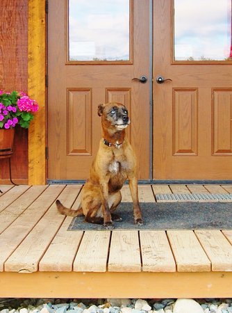 """Port Alsworth, AK: """"Lola"""" was everyones friend in an instant"""