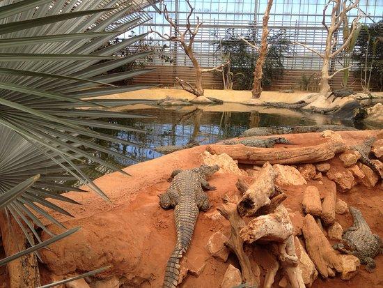 Ah Les Crocrocro Picture Of La Ferme Aux Crocodiles