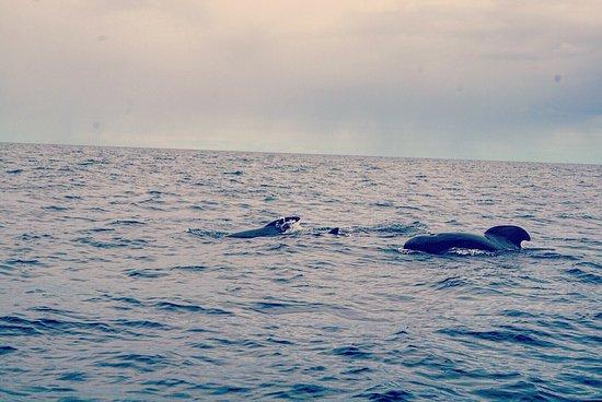 Pleasant Bay, Canadá: photo1.jpg