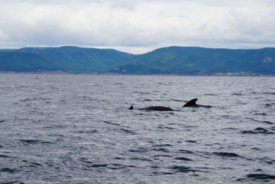 Pleasant Bay, كندا: photo2.jpg