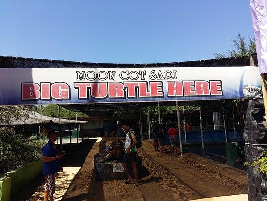 Turtle Island Tour: photo0.jpg