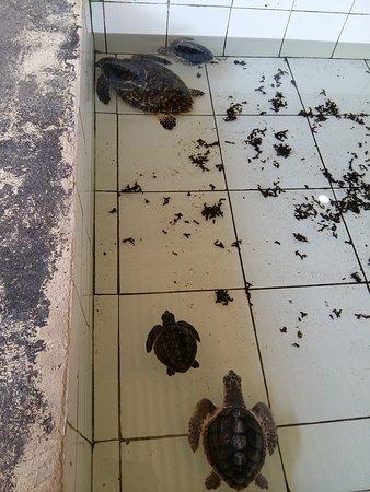 Turtle Island Tour: photo2.jpg