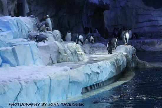 Royal Oak, MI: The Penguin