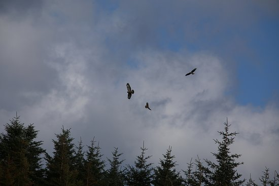 Isle of Jura, UK: Soaring birds