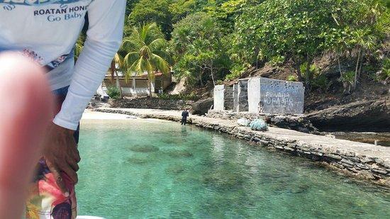 Bay Islands Adventures: 20160720_135421_large.jpg