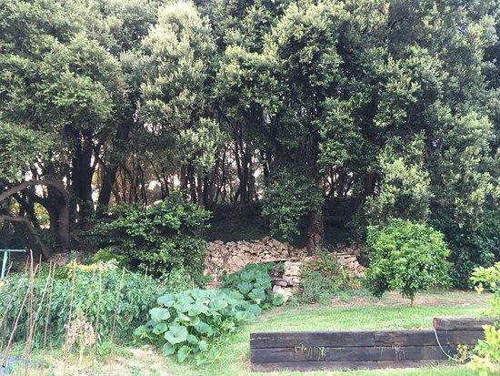 Arnuero, Hiszpania: Huerto y jardín de la Posada, atrás el bosquecillo y la torre