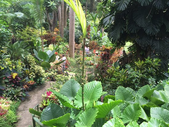 写真Hunte's Gardens枚