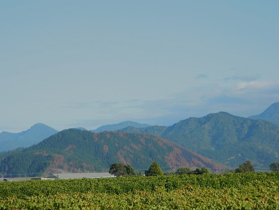 Blenheim, Nuova Zelanda: The landscape from the Vines Village