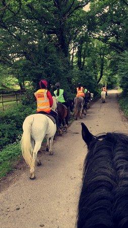 Ringwood, UK: Bagnum Equestrian Centre Ltd