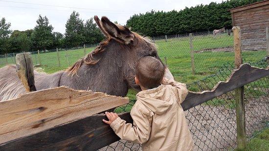 Quend, France: Un petit âne très calin