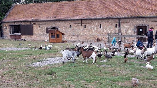 Quend, France: Vue d'ensemble du parc avec les chèvres, canards, poules, etc...