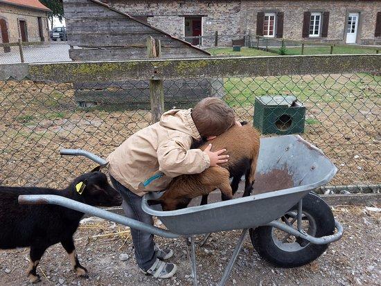 Quend, France: Un petit calin encore à une chèvre dans une brouette...
