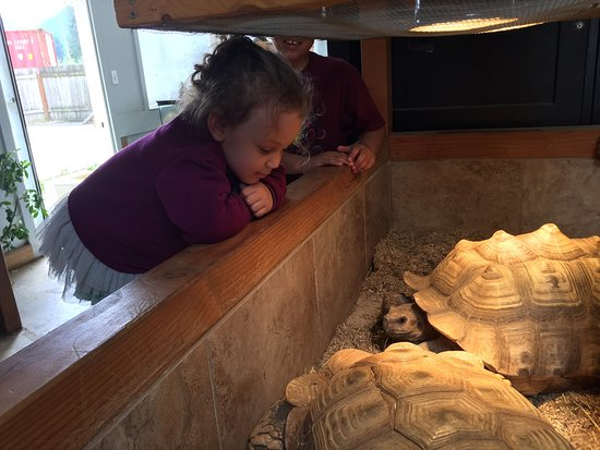 Monroe, WA: My grandkids had such a great time! Great interaction with reptiles, the workers were helpful an