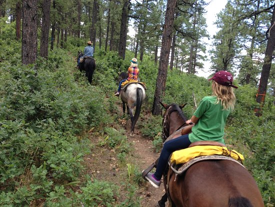 Pagosa Springs, CO: Through the forest!