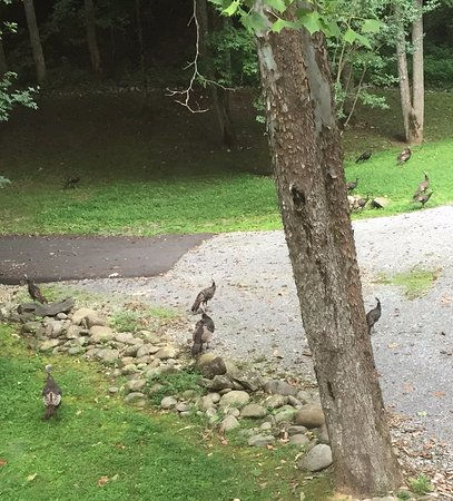 Cosby Creek Cabins: Wild turkeys spotted from bedroom balcony!