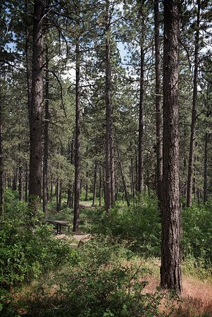 Ponderosa Pines shade the campgrounds at Mancos State Park