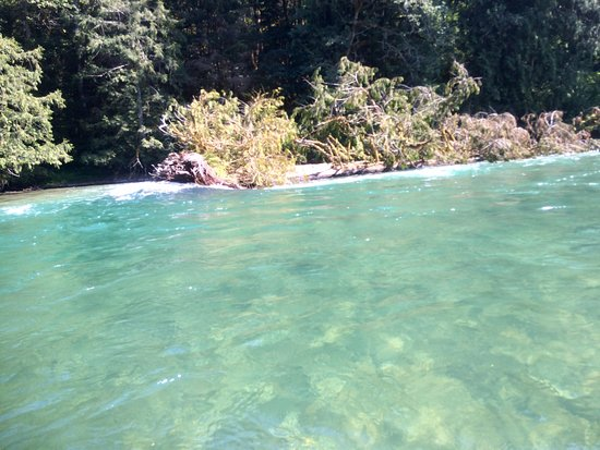 Bellingham, WA: Clear shallow water on the Skagit river