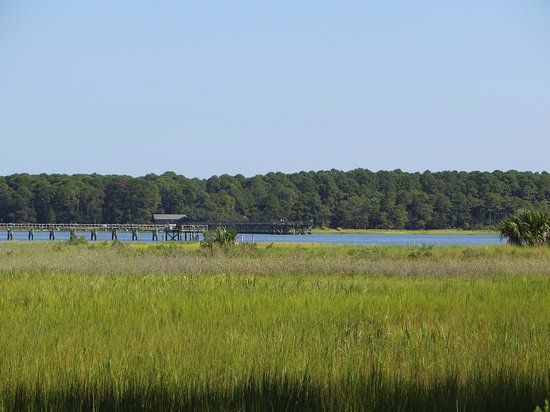 Hunting Island State Park: View of Forest and Fripp Inlet