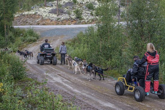 Geilo, Norwegia: Mushing in summertime