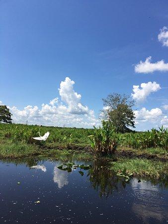 Cocoa, Floride : Good experience