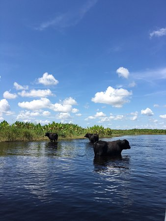 Cocoa, FL: Good experience