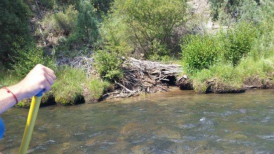 Clear Creek Rafting Company : Beaver lodge