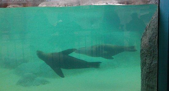 Asheboro, North Carolina: Seals