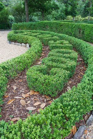 LaGrange, GA: Formal boxwood garden
