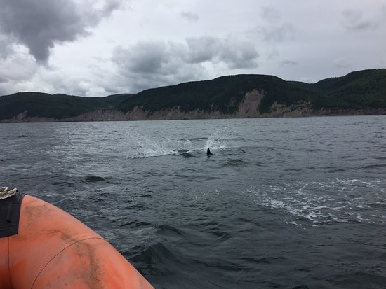 Pleasant Bay, Canadá: Pilot Whales, August 2016