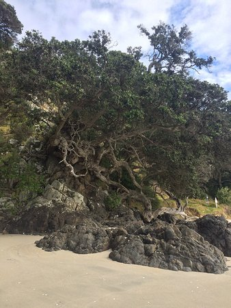 Waiheke Island, Neuseeland: photo2.jpg