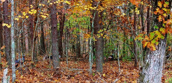 Spencer, TN: Forest in Fall Creek Falls