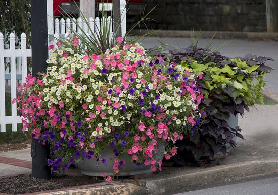 Wilmore, KY: These beautiful flowers were one of many lining the street.