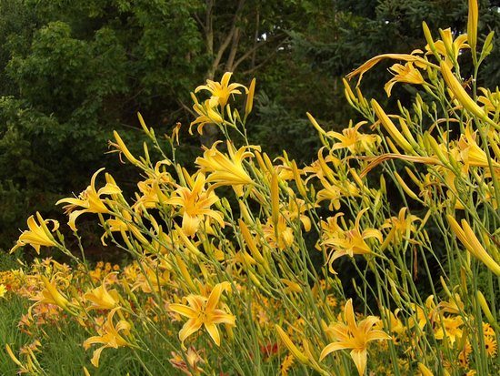 Saint Andrews, Canada: Kingsbrae Garden
