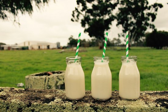 Cowaramup, Australia: Taste Our Farm Fresh Milk!