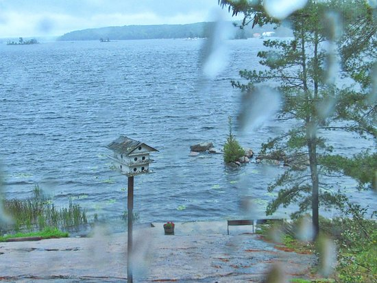 Buckhorn, Canadá: View out a back window of the gallery on a rainy day.