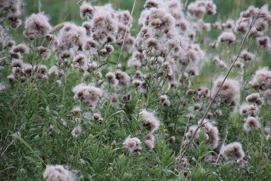 Port Colborne, Канада: Interesting flowers