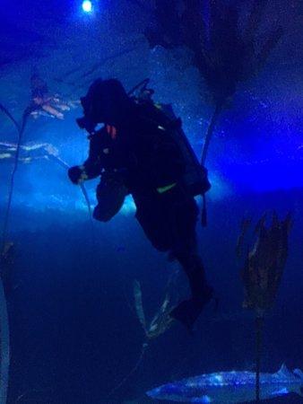Aquarium of the Bay: photo1.jpg