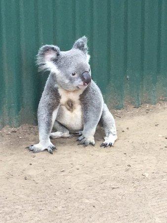 Currumbin, Australië: photo2.jpg
