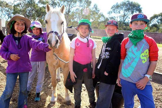 Braidwood, Austrália: Champ loves attention!