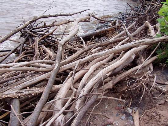 Driftwood at the Mouth of the Brule River