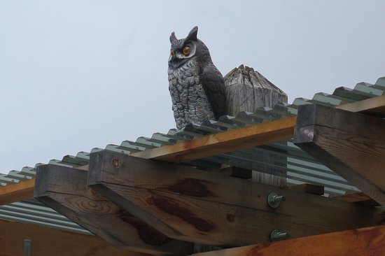 Penticton, كندا: Owling Success