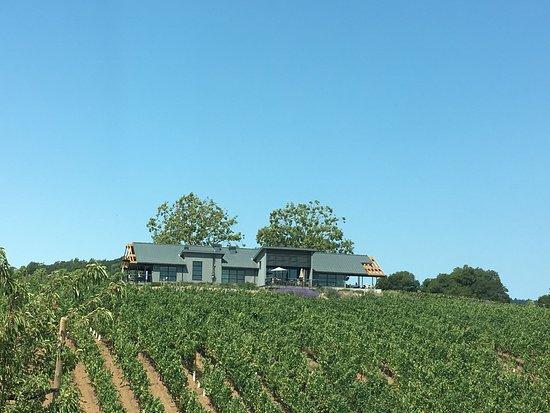 Healdsburg, Californië: Great views!