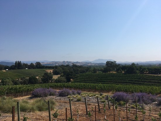 Healdsburg, Califórnia: Great views!