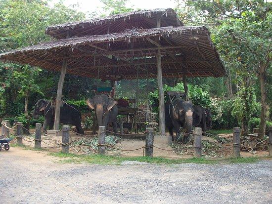 """Ко Чанг"" Сафари: Прогулки на слонах: Sun protection for the elephants."