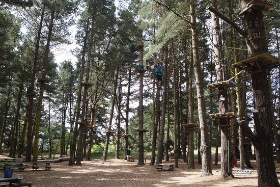 Adrenaline Forest: A great day in the forest!